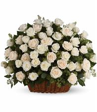 Basket of 75 white roses with greens