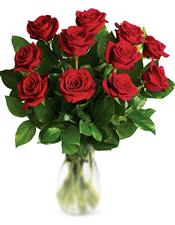 11 Classic Red Roses