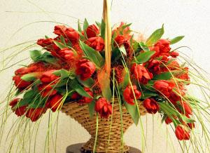 Basket with 51 tulips