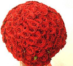 51 lond red roses. Super offer!