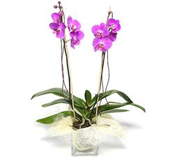 Orchid plant with decorate